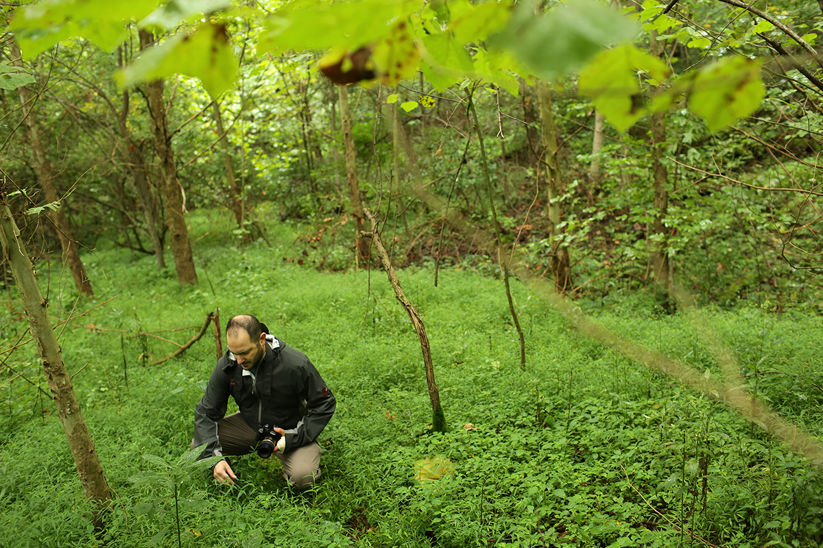 To the casual observer, Japanese stiltgrass appears as a harmless, leafy green plant that blends into the majestic scenery of your weekend hike through the woods.   Plant biologists like Craig Barrett know better.
