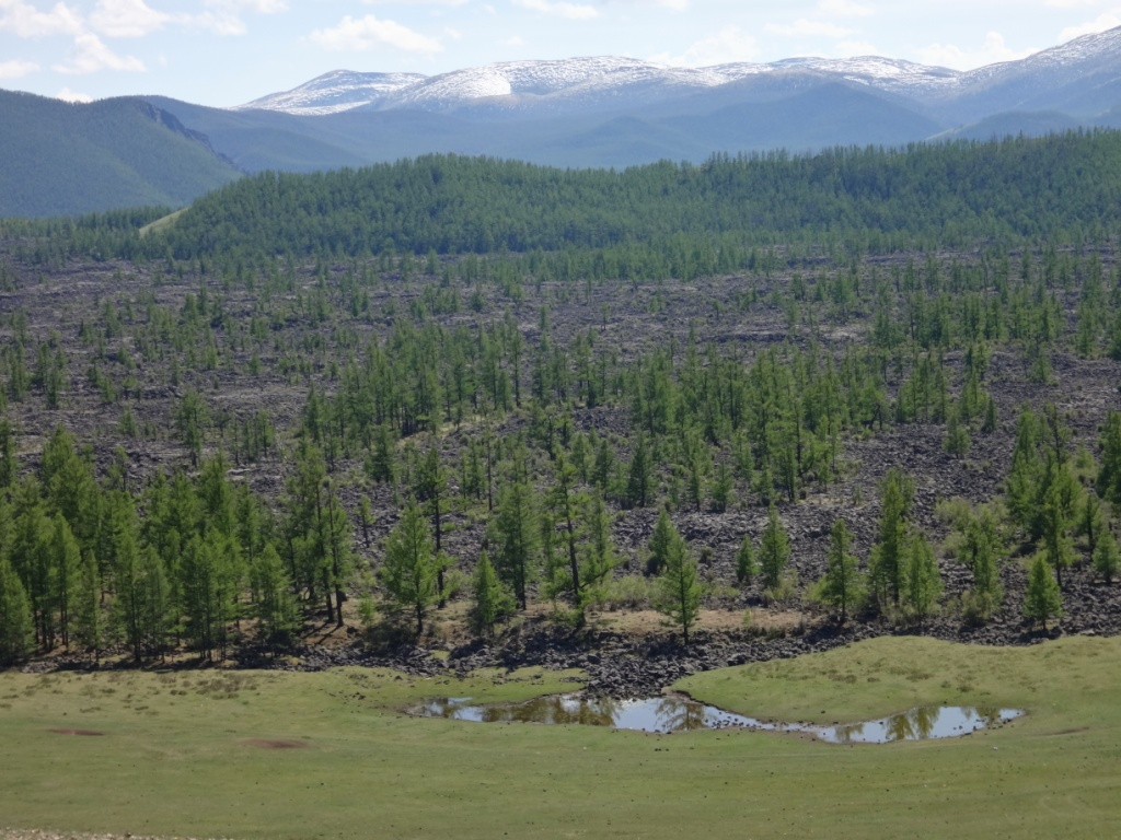 Ancient trees in Mongolia dating back more than 2,000 years are helping place current and future climate change in context, according to a new West Virginia University-led study. The study describes the duration and severity of past and future droughts in Mongolia, providing a unique perspective: a historical record that extends to the first millennium. Shorter records would not provide the same context. Using dendrochronology, or the study of ring-growth patterns in trees, Hessl and colleagues created annually-dated drought histories from ancient living and dead trees growing on lava flows, extending the instrumental record back more than 2000 years.
